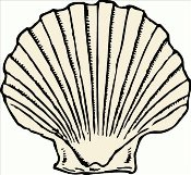 scallop-shell2